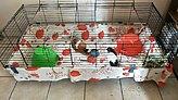 guinea pig fleece liner hedge hog
