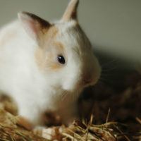 Train your bunny